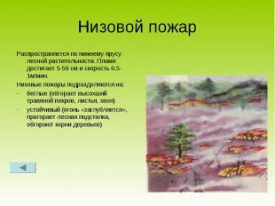 Низовой пожар Распространяется по нижнему ярусу лесной растительности. Пламя дос