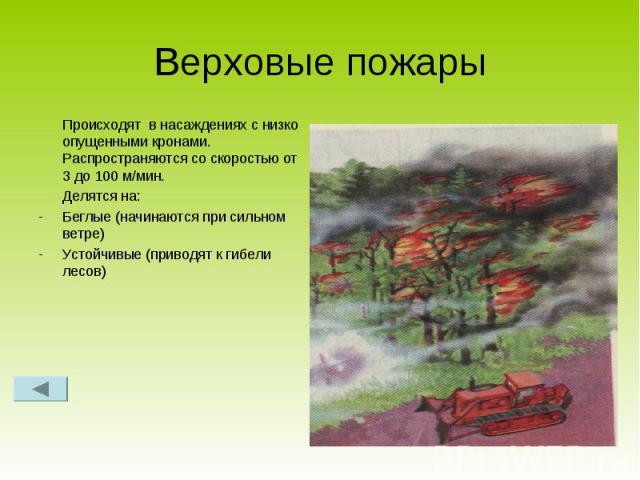 Верховые пожары Происходят в насаждениях с низко опущенными кронами. Распространяются со скоростью от 3 до 100 м/мин.Делятся на:Беглые (начинаются при сильном ветре)Устойчивые (приводят к гибели лесов)