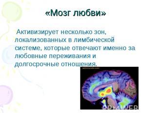 «Мозг любви» Активизирует несколько зон, локализованных в лимбической системе, к