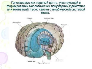 Гипоталамус как нервный центр, участвующий в формировании биологических побужден