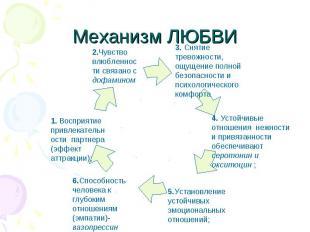 Механизм ЛЮБВИ 1. Восприятие привлекательности партнера (эффект аттракции);2.Чув