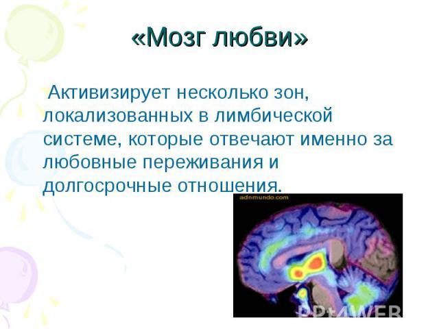 «Мозг любви» Активизирует несколько зон, локализованных в лимбической системе, которые отвечают именно за любовные переживания и долгосрочные отношения.