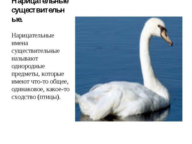 Нарицательные существительные. Нарицательные имена существительные называют однородные предметы, которые имеют что-то общее, одинаковое, какое-то сходство (птицы).