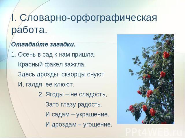 I. Словарно-орфографическая работа. Отгадайте загадки.1. Осень в сад к нам пришла, Красный факел зажгла. Здесь дрозды, скворцы снуют И, галдя, ее клюют. 2. Ягоды – не сладость, Зато глазу радость. И садам – украшение, И дроздам – угощение.
