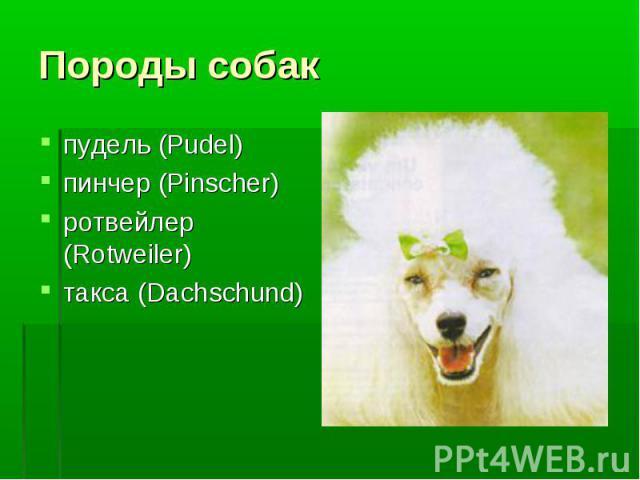 Породы собак пудель (Pudel)пинчер (Pinscher)ротвейлер (Rotweiler)такса (Dachschund)