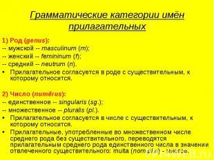 Грамматические категории имён прилагательных 1) Род (genus):-- мужской -- mascul