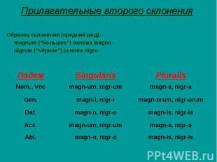 """Прилагательные второго склонения Образец склонения (средний род): magnum (""""больш"""