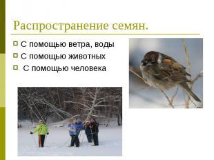 С помощью ветра, воды С помощью ветра, воды С помощью животных С помощью человек