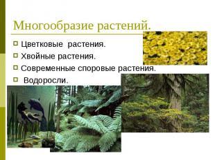 Цветковые растения. Цветковые растения. Хвойные растения. Современные споровые р