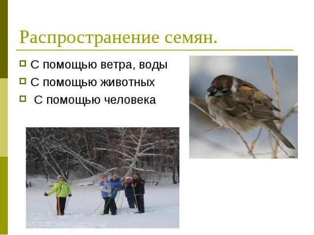 С помощью ветра, воды С помощью ветра, воды С помощью животных С помощью человека