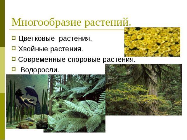 Цветковые растения. Цветковые растения. Хвойные растения. Современные споровые растения. Водоросли.