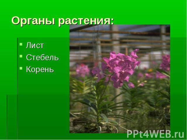 Лист Лист Стебель Корень