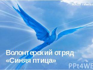 Волонтерский отряд «Синяя птица» МАОУ гимназия №40