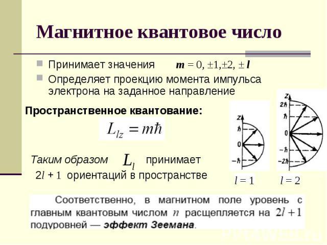 Принимает значения m = 0, ±1,±2, ± lОпределяет проекцию момента импульса электрона на заданное направление Пространственное квантование: Таким образом 2l + 1 ориентаций в пространстве