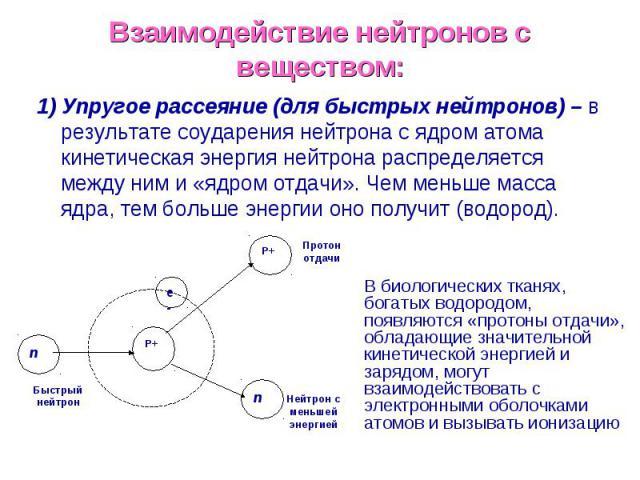 Взаимодействие нейтронов с веществом: 1) Упругое рассеяние (для быстрых нейтронов) – в результате соударения нейтрона с ядром атома кинетическая энергия нейтрона распределяется между ним и «ядром отдачи». Чем меньше масса ядра, тем больше энергии он…