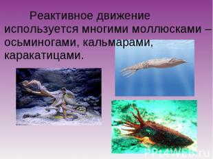 Реактивное движение используется многими моллюсками – осьминогами, кальмарами, к