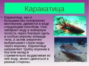 Каракатица, как и большинство головоногих моллюсков, движется в воде следующим с