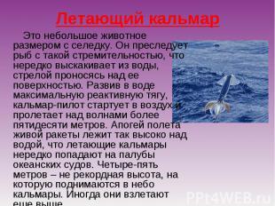 Летающий кальмар Это небольшое животное размером с селедку. Он преследует рыб с
