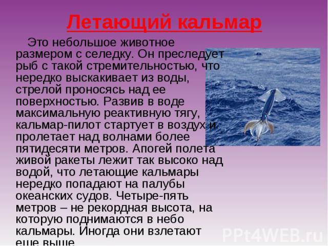 Летающий кальмар Это небольшое животное размером с селедку. Он преследует рыб с такой стремительностью, что нередко выскакивает из воды, стрелой проносясь над ее поверхностью. Развив в воде максимальную реактивную тягу, кальмар-пилот стартует в возд…