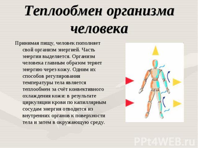 Теплообмен организма человека Принимая пищу, человек пополняет свой организм энергией. Часть энергии выделяется. Организм человека главным образом теряет энергию через кожу. Одним их способов регулирования температуры тела является теплообмен за счё…