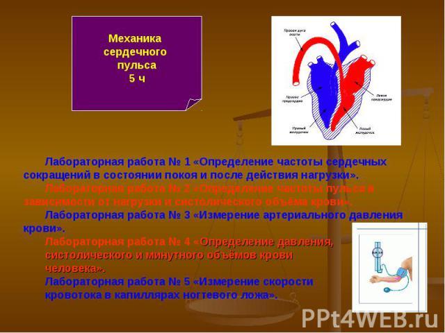 Механика сердечного пульса5 ч Лабораторная работа № 1 «Определение частоты сердечных сокращений в состоянии покоя и после действия нагрузки».Лабораторная работа № 2 «Определение частоты пульса в зависимости от нагрузки и систолического объёма крови»…