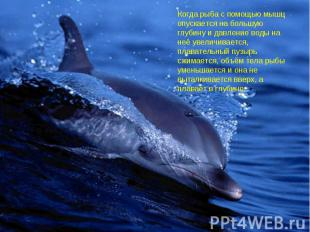 Когда рыба с помощью мышц опускается на большую глубину и давление воды на неё у