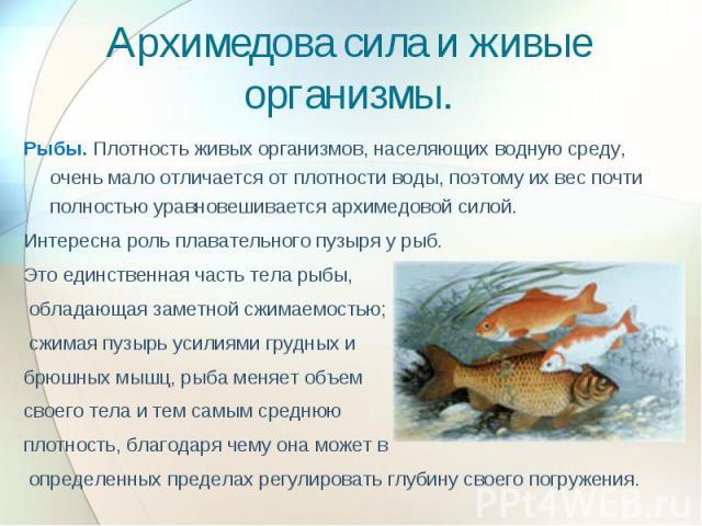 Архимедова сила и живые организмы. Рыбы. Плотность живых организмов, населяющих водную среду, очень мало отличается от плотности воды, поэтому их вес почти полностью уравновешивается архимедовой силой. Интересна роль плавательного пузыря у рыб. Это …