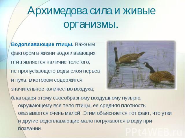 Архимедова сила и живые организмы. Водоплавающие птицы. Важным фактором в жизни водоплавающих птиц является наличие толстого, не пропускающего воды слоя перьев и пуха, в котором содержится значительное количество воздуха; благодаря этому своеобразно…