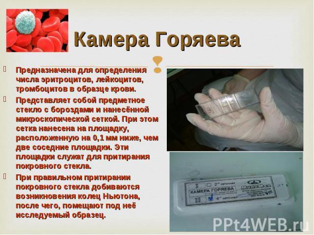 Россия, методика ручной подсчет лейкоцитов питания многом