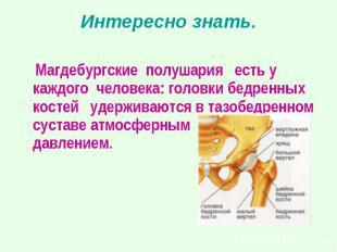 Магдебургские полушария есть у каждого человека: головки бедренных костей удержи