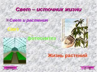 Свет – источник жизни Свет и растения