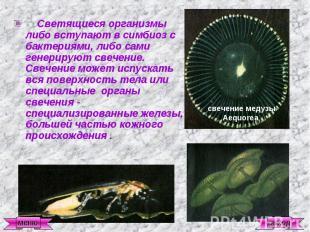 Светящиеся организмы либо вступают в симбиоз с бактериями, либо сами генерируют