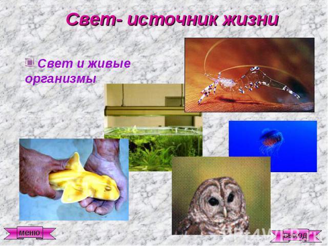 Свет- источник жизни Свет и живые организмы