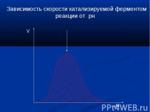 Зависимость скорости катализируемой ферментом реакции от рн