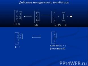 Действие конкурентного ингибитора Комлекс Е +(неактивный)