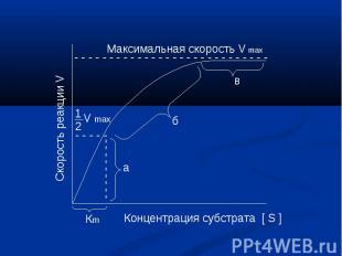 Максимальная скорость V max Скорость реакции V Концентрация субстрата