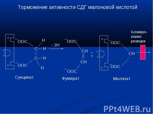 Торможение активности СДГ малоновой кислотой Блокиро-вание реакции