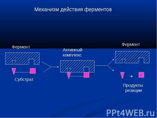 Механизм действия ферментов Фермент Субстрат Активныйкомплекс Фермент Продукты реакции