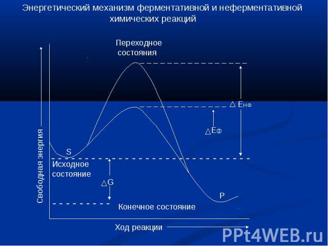 Энергетический механизм ферментативной и неферментативной химических реакций Переходное состояния Исходноесостояние Конечное состояние