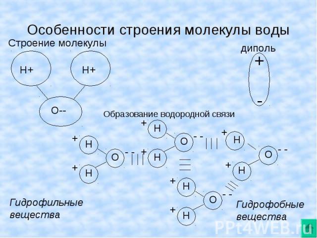 Особенности строения молекулы воды Строение молекулы Образование водородной связи Гидрофильные вещества Гидрофобныевещества