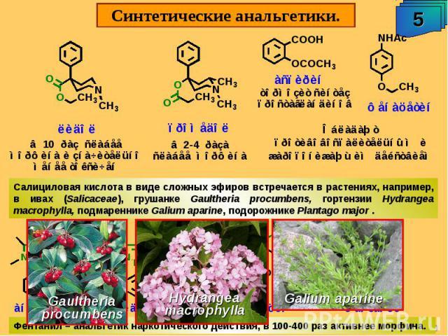 Синтетические анальгетики. Салициловая кислота в виде сложных эфиров встречается в растениях, например, в ивах (Salicaceae), грушанке Gaultheria procumbens, гортензии Hydrangea macrophylla, подмареннике Galium aparine, подорожнике Plantago major .