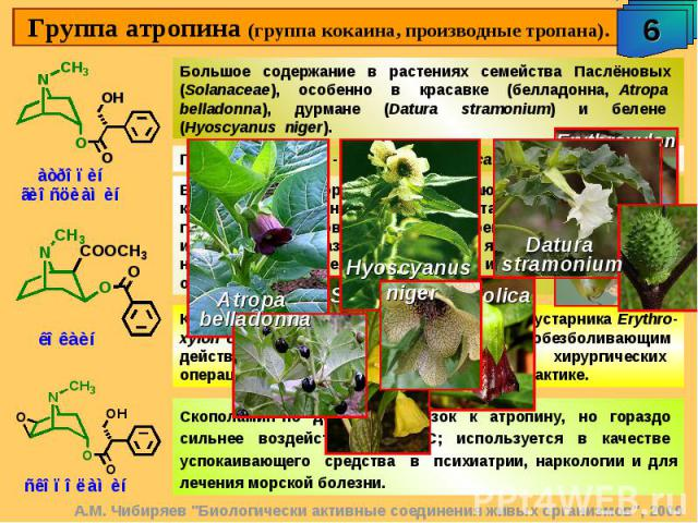 Группа атропина (группа кокаина, производные тропана). Большое содержание в растениях семейства Паслёновых (Solanaceae), особенно в красавке (белладонна, Atropa belladonna), дурмане (Datura stramonium) и белене (Hyoscyanus niger). Блокатор м-холинор…