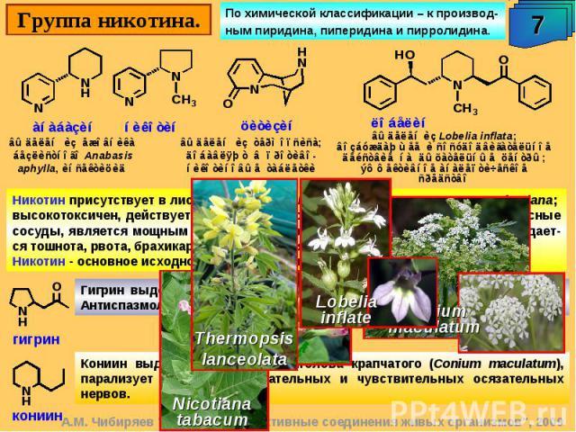 Никотин присутствует в листьях Nicotiana tabacum (до 8%) и других видов Nicotiana; высокотоксичен, действует на вегетативную нервную систему, сужает кровеносные сосуды, является мощным ганглиоблокатором. При остром отравлении наблюдает-ся тошнота, р…