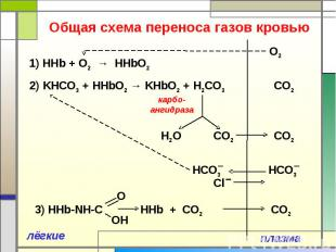 Общая схема переноса газов кровью 1) ННb + O2 → HHbO2 2) KНCO3 + HHbO2 → KHbO2 +