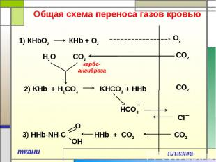 Общая схема переноса газов кровью 1) КHbO2 КНb + O2 2) KHb + Н2CO3 KНCO3 + HHb 3