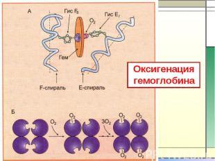 Оксигенация гемоглобина