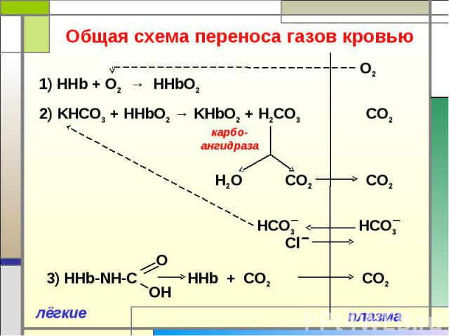 Общая схема переноса газов кровью 1) ННb + O2 → HHbO2 2) KНCO3 + HHbO2 → KHbO2 + Н2CO3 3) HHb-NH-C HHb + CO2