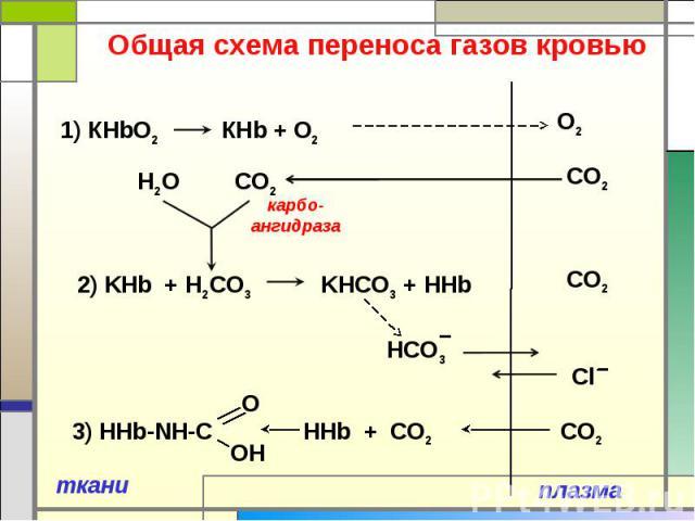 Общая схема переноса газов кровью 1) КHbO2 КНb + O2 2) KHb + Н2CO3 KНCO3 + HHb 3) HHb-NH-C HHb + CO2