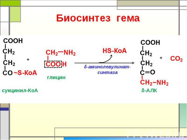 Биосинтез гема