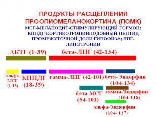 ПРОДУКТЫ РАСЩЕПЛЕНИЯ ПРООПИОМЕЛАНОКОРТИНА (ПОМК)МСГ-МЕЛАНОЦИТ-СТИМУЛИРУЮЩИЙ ГОРМ